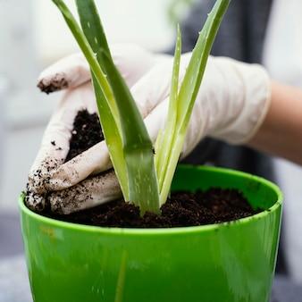 Close-up mãos jardinando com luvas