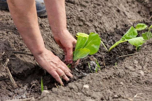 Close-up mãos plantas de jardinagem ao ar livre