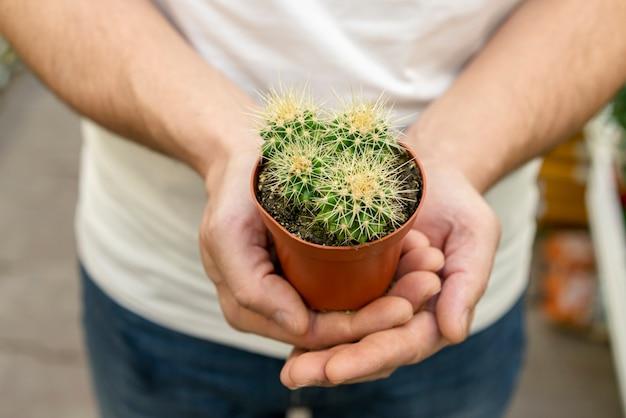 Close-up mãos segurando uma pequena planta de cacto