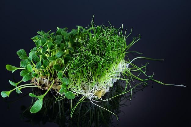 Close-up microgreens de girassol e cebola em um fundo preto.