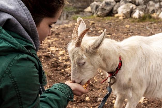 Close-up mulher alimentando cabra