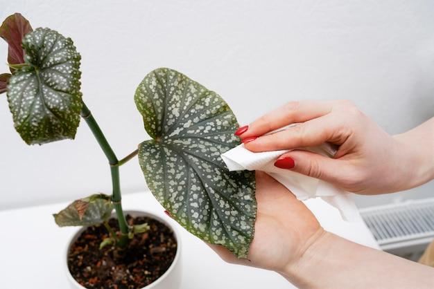 Close-up, mulher limpando folhas de plantas