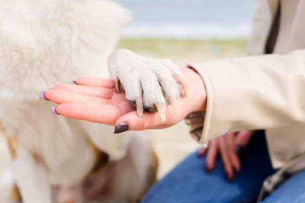 Close-up mulher segurando cães pata