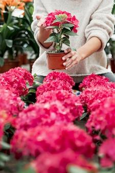 Close-up mulher segurando o pote com flor rosa