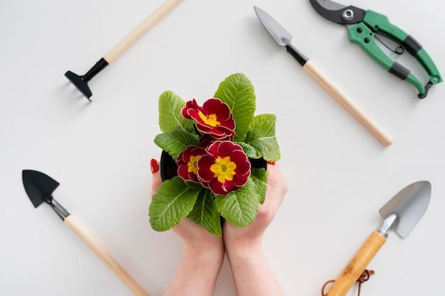 Close-up, mulher segurando um vaso de flores