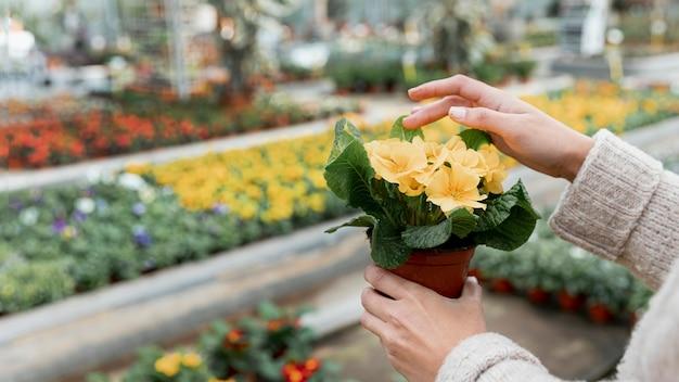 Close-up mulher segurando uma flor em vaso