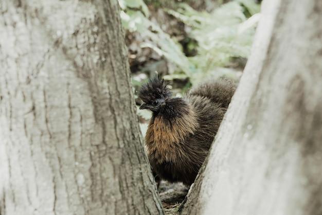 Close-up na mãe e frango de seda