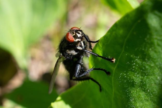 Close-up na mosca, sentado em uma folha