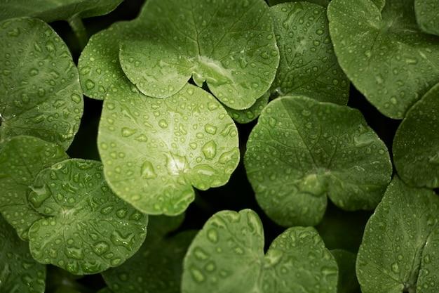 Close-up nas folhas verdes na natureza Foto gratuita