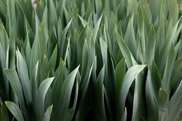 Close-up nas folhas verdes na natureza