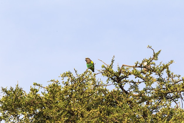 Close-up no papagaio marrom na árvore
