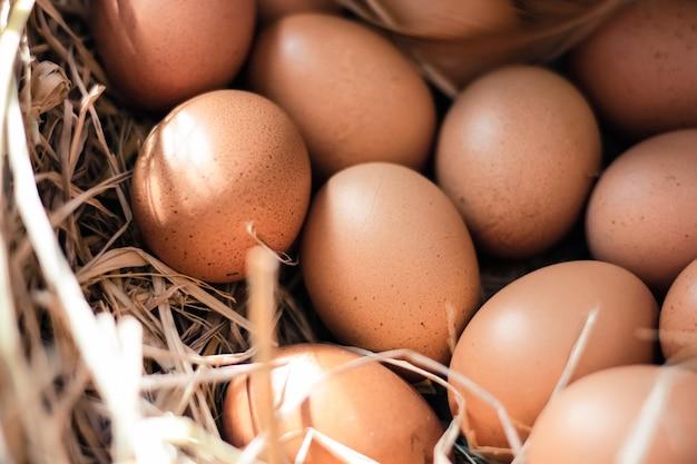 Close-up ovos frescos de galinha de fazenda no ninho de feno