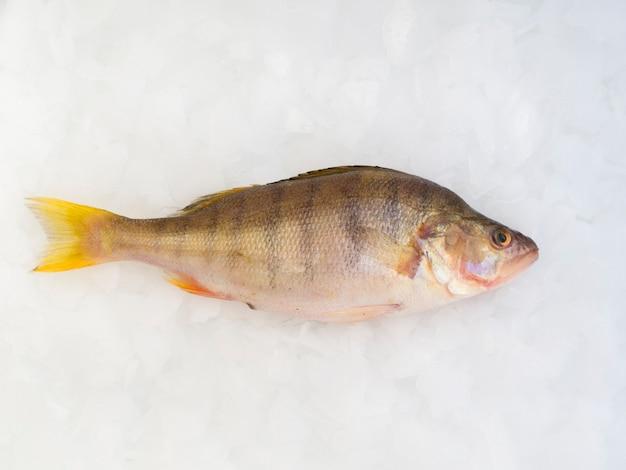 Close-up peixe fresco deitado em cubos de gelo