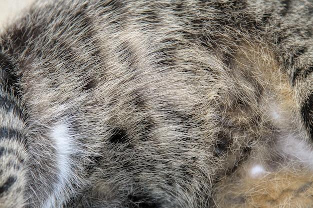 Close-up pele de gato cinza