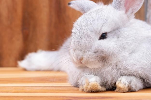 Close-up, pequeno coelho cinzento deitado no fundo da mesa de madeira