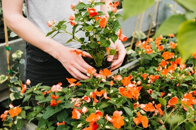Close-up pessoa cuidando de plantas