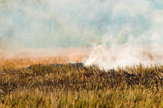 Close-up queimar palha de arroz