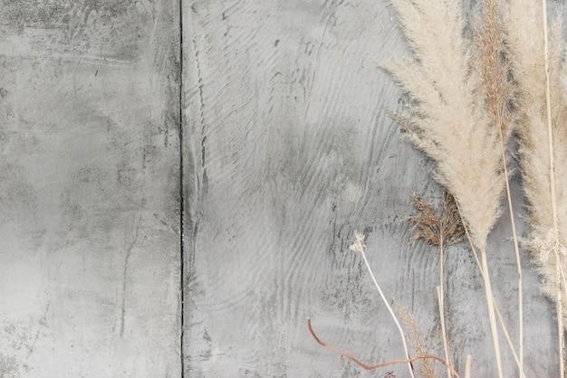 Close-up, secado, plantas, decoração, ligado, concreto, parede