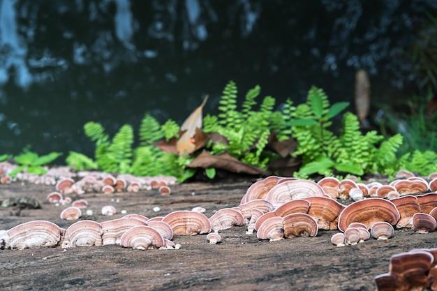 Close-up tiro de cogumelo na madeira