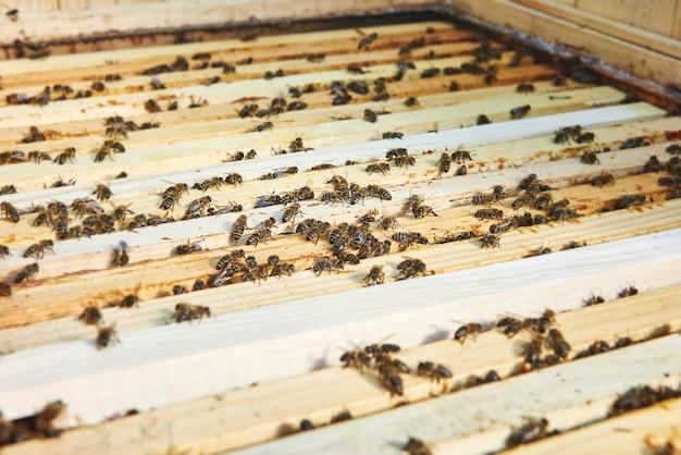 Close-up tiro de colméias no apiário
