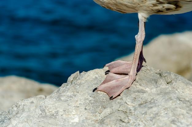 Close-up tiro de patas de uma gaivota de pé em uma pedra