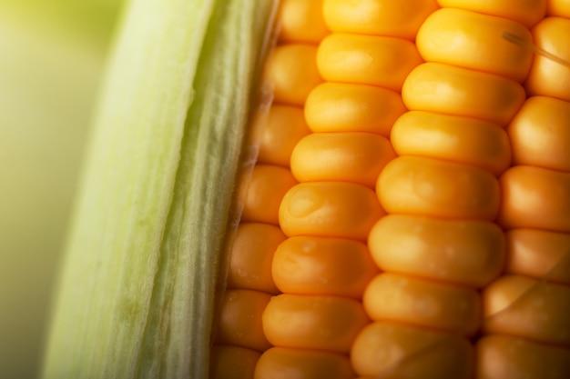 Close-up tiro milho doce maduro e descascado com gota de água