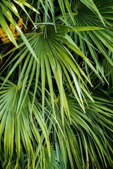 Close up, tiro, palmeiras tropicais