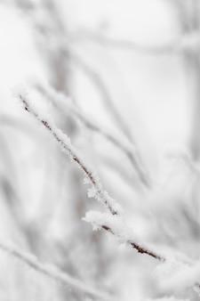 Close-up turva ramos congelados com neve