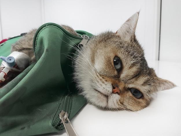 Close up.um gato doente deitado na mesa cirúrgica no hospital