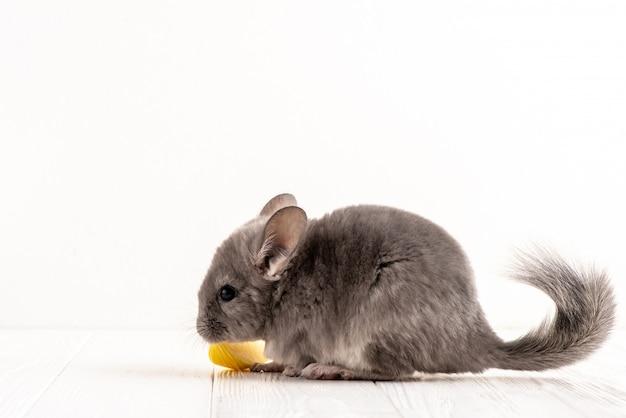Close up um perfil cinzento do rato no fundo branco em seguida uma parte de maçã.