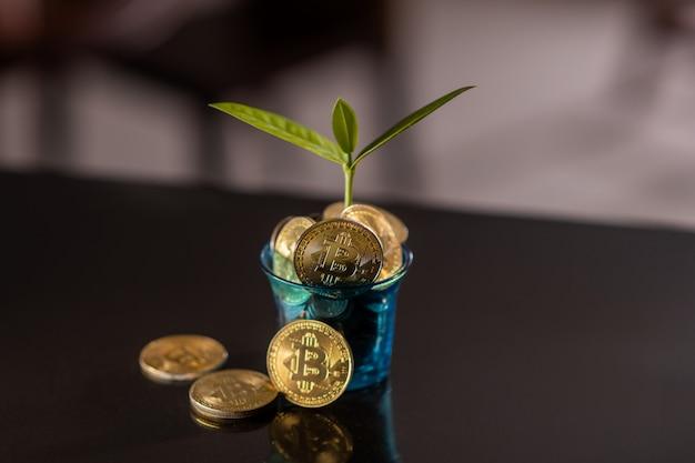 Close-up: uma panela com uma planta cheia de bitcoins. aumento de preço de criptomoeda