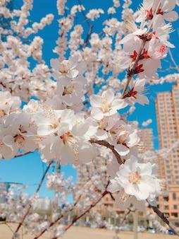 Close up vertical de flores de cerejeira em uma imagem desfocada