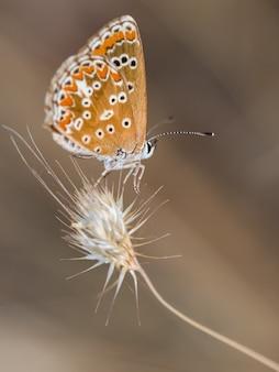 Close up vertical de uma borboleta em seu ambiente natural.