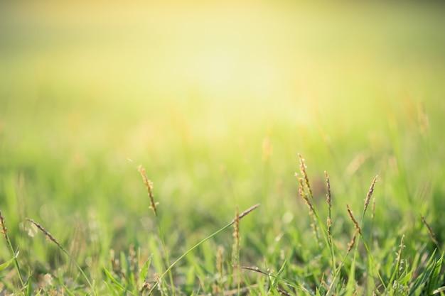 Close-up vista bonita da grama verde natureza no fundo da árvore de vegetação turva