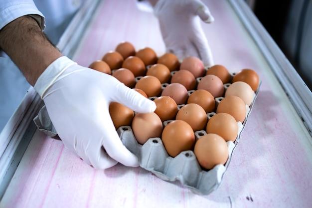 Close-up vista da caixa de papelão com ovos frescos na correia transportadora da fazenda.
