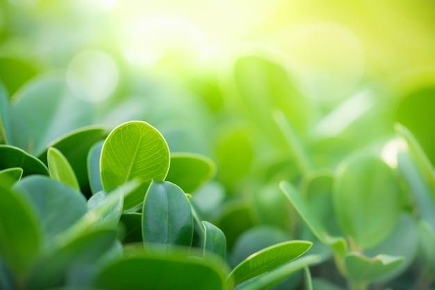 Close-up vista da folha verde no jardim sob a luz solar para o fundo
