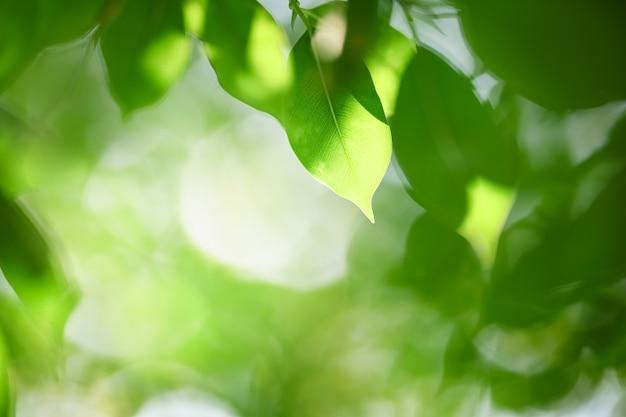 Close-up vista da natureza da folha verde sob a luz do sol no fundo desfocado da vegetação