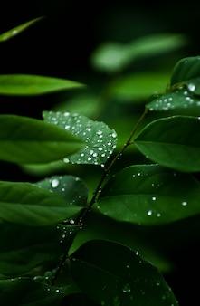 Close-up, vista, de, chuva, gotas, ligado, folha
