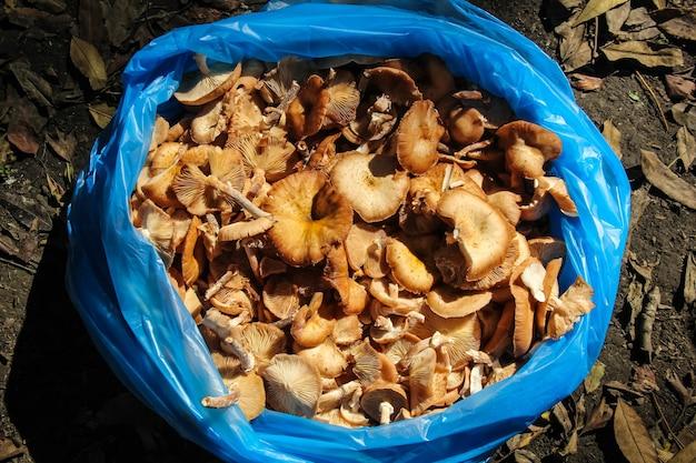 Close-up vista de cogumelos frescos brilhantes em um saco plástico logo após a colheita na floresta