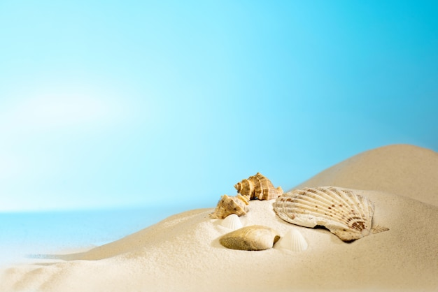 Close-up vista de conchas na praia