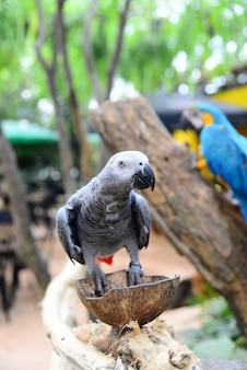 Close-up vista do pássaro colorido da arara amazônia