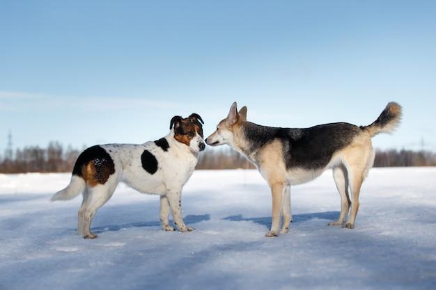 Close-up vista em uma reunião de dois cães e se conhecer no dia de inverno no campo
