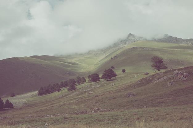 Close-up vista floresta e montanhas cenas no parque nacional dombai, cáucaso, rússia, europa. paisagem de verão, clima ensolarado, céu azul dramático e dia ensolarado