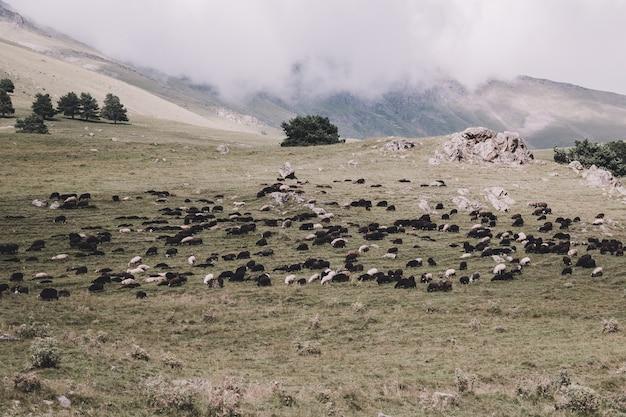 Close-up vista floresta e ovelhas no parque nacional dombai, cáucaso, rússia, europa. paisagem de verão, clima ensolarado, céu azul dramático e dia ensolarado