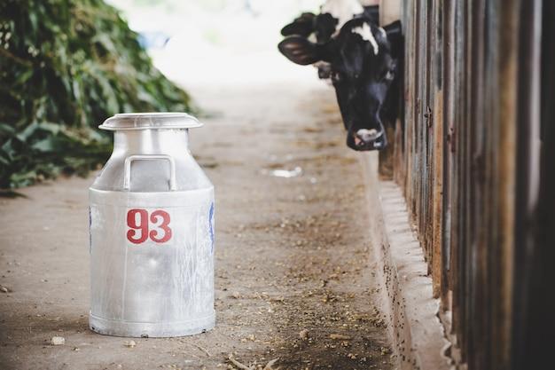 Close-up, vista, ligado, balde, ordenhar, vacas, em, a, animal, celeiro