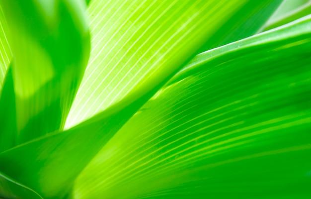 Close-up vista natural folhas verdes com luz do sol no jardim ecologia