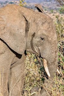 Close vertical da cabeça de um elefante fofo no deserto
