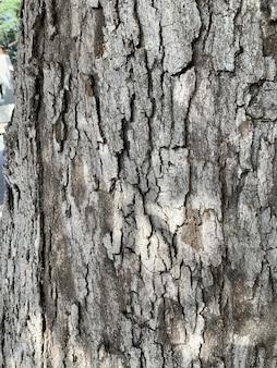 Close vertical de casca de árvore marrom