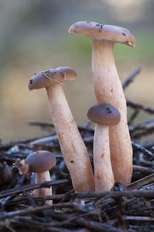 Close vertical de cogumelos mágicos no chão coberto de galhos de árvores sob a luz do sol