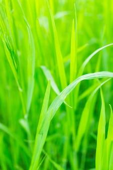 Close vertical de grama em um campo sob a luz do sol com um fundo desfocado